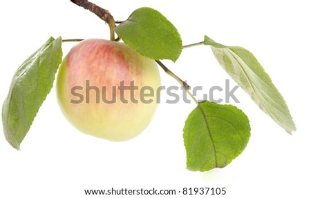 apple with leaves on white background