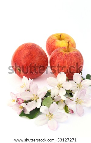 Apples and apple tree blossoms - stock photo
