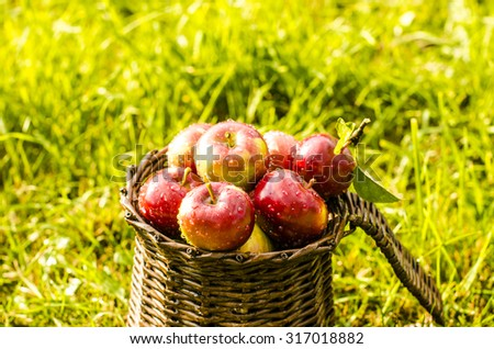 Apples in a basket on a green background with water drop