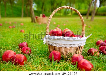apples in basket on a grass trees field in red color - stock photo