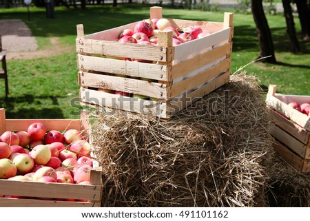 Apples in the box