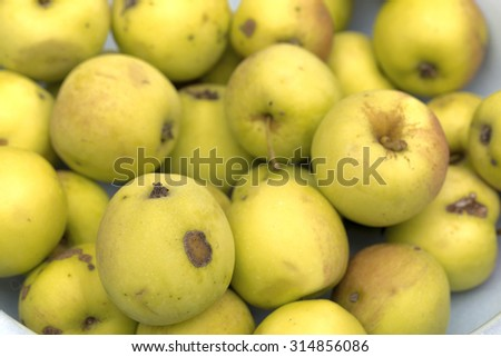 apples on the white background