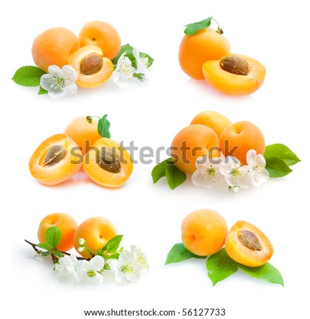 apricots collection - stock photo