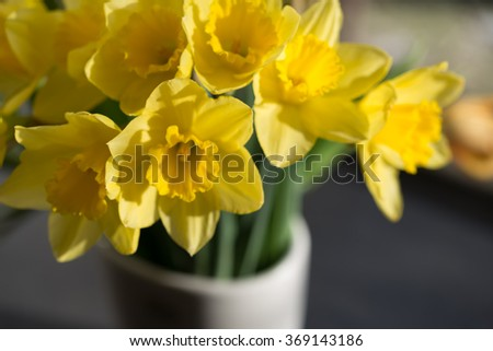 April blooming Narcissi flowers arranged in vase for interior  Daffodil, yellow spring flower in the Amaryllidaceae amaryllis family. Used for fragrances, medicinal plant as traditional medicines - stock photo