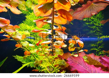 Aquarian plant - stock photo
