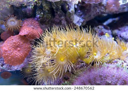aquarium algae - stock photo