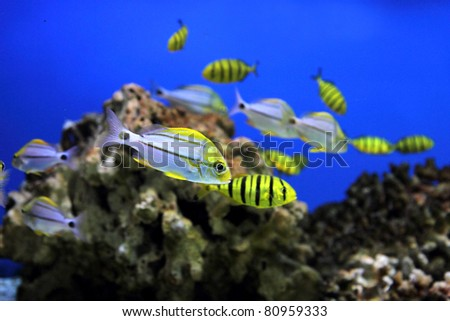 aquarium background - stock photo