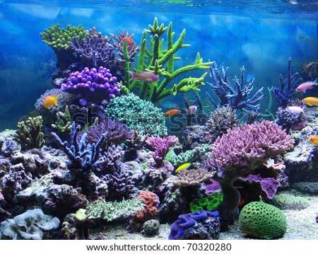 Aquarium corals reef - stock photo