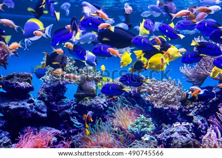 Aquarium fish Aquarium fish will delight you with its unforgettable beauty of the underwater world.