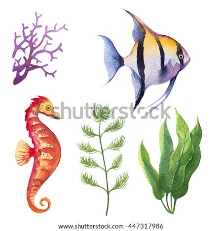 aquarium fish watercolor - stock photo