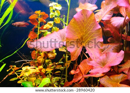 Aquarium plants - stock photo