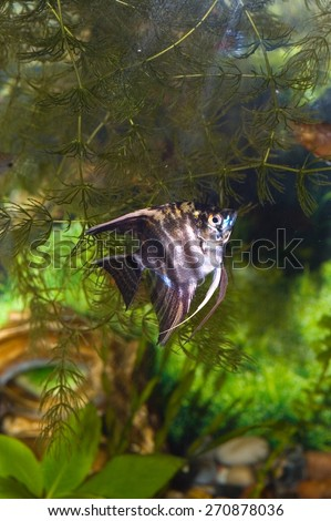 aquarium with fish. Green theme - stock photo