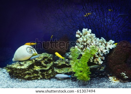 Aquarium with fishes and coral