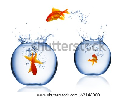 Aquarium with goldfishes - stock photo