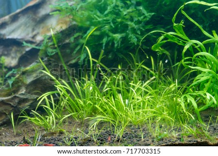 Aquascape Underwater Plants And Dragon Stone
