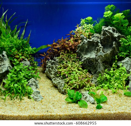 Aquascaping Of The Beautiful Planted Tropical Freshwater Aquarium