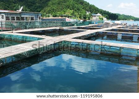 Aquatic farm on the lake under sunshine - stock photo
