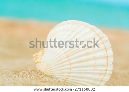Aquatic. Shell on the beach - stock photo