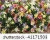 Aquilegia, Chelsea Flower Show - stock photo