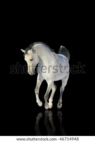 arab stallion over a black - stock photo