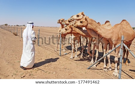 Arab with a camel in the desert - stock photo