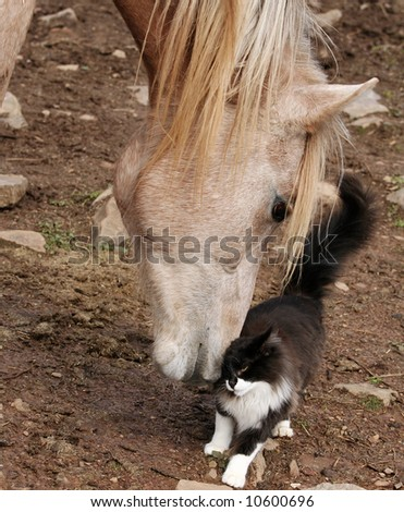 Arabian colt with young cat - stock photo