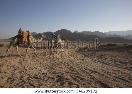 Arabic Desert in Middle East/Arabian Guy in Middle East Desert in Africa with Camel/Arabic Desert Theme For Tourism