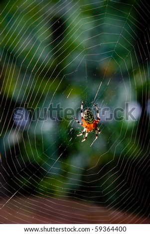 Araneus marmoreus, marbled orb weaver spider, and web. - stock photo