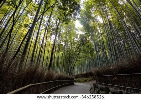 Arashiyama bamboo forest, Kyoto, Japan - stock photo