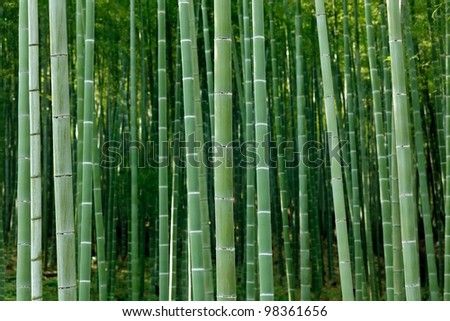 arashiyama bamboo forest, Kyoto, Japan - stock photo