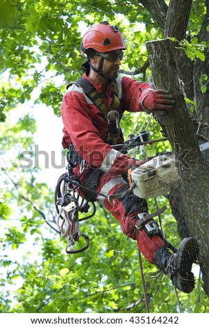 Arborist saws oak chainsaw at height - stock photo