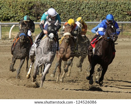 "ARCADIA, CA - JAN 12: The field turns for home in a maiden race at Santa Anita Park on Jan 12, 2013 in Arcadia, CA. Eventual winner is ""Branding"" (white shadow roll) and jockey Gary Stevens. - stock photo"
