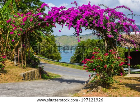 Arch of purple flowers in the garden in Thailand