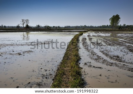 Architecture farming in Asia rice field flooding - stock photo