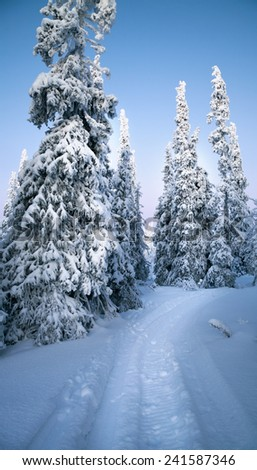 Arctic forest in winter with frost flower - stock photo