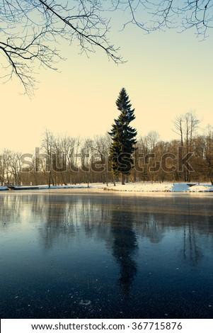are covered with ice a pond. fir tree at a pond