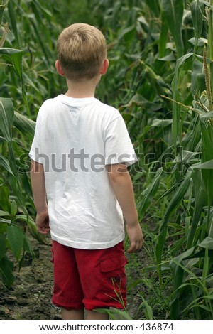 Are We Lost?  A child standing in a corn field