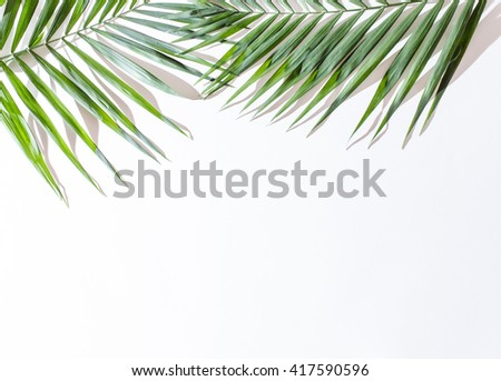 areca palm leaves - stock photo