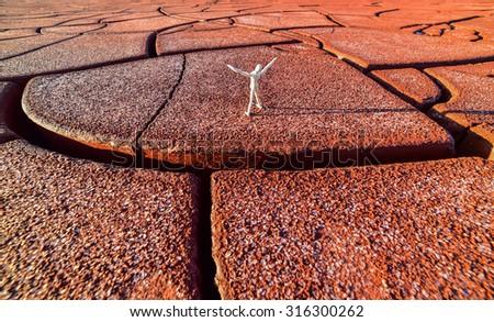 arid land and life - stock photo