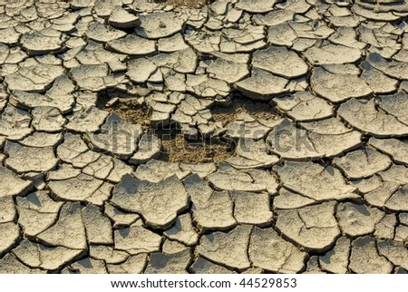 Arid land during the dry season - Detailed View