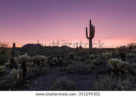 Arizona Desert Sunset - stock photo