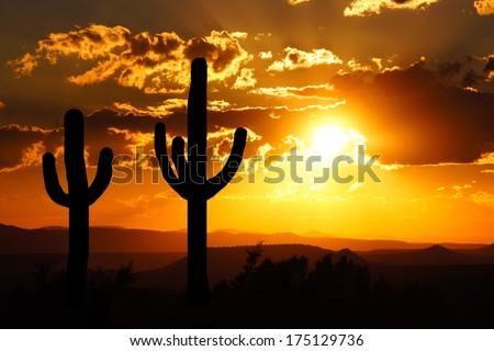 Arizona desert sunset with giant saguaro silhouette - stock photo