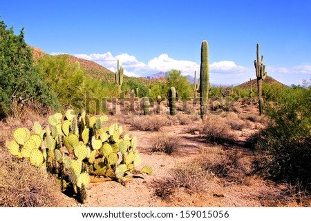 Arizona desert view with saguaro cacti and prickly pear - stock photo
