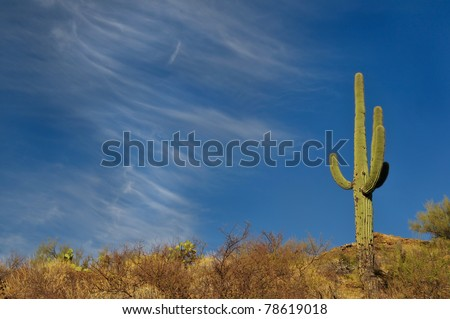 arizona saguaro against blue sky with wispy cirrus clouds