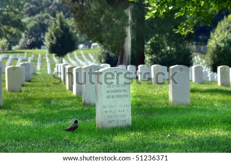 Arlington Cemetery has markers remembering soldiers who fought for our country.  This marker is visited by a Robin on a quiet summer day.