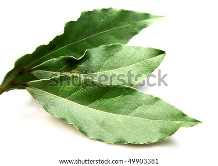 Aromatic Bay leaves ( laurel )  isolated over white background