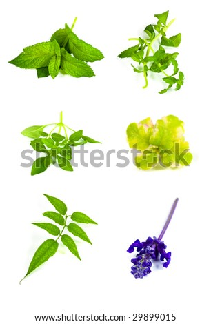 aromatic herbs collection - stock photo