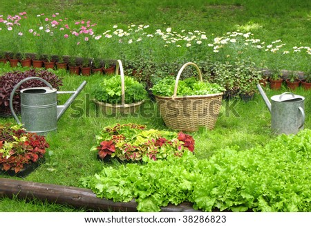 Aromatic herbs in baskets and containers - stock photo