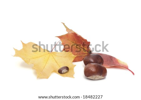 arrangement made of leaves and chestnuts on white