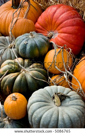 Arrangement of a variety of squash and pumpkins on straw, leaves and other bits of nature. - stock photo